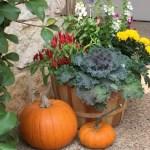 fall flower arrangement and pumpkins / Lilacs and Longhorns