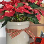 speckled poinsettia in a vintage crock