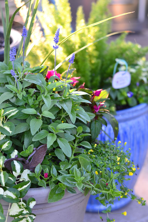 mixed-annual-flower-pots