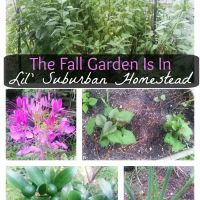 The Fall Garden Is In