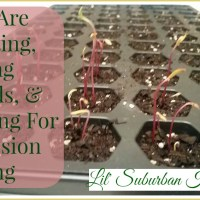 Seeds Are Sprouting, Keeping Records, & Planning For Succession Planting (Bonus Mini-Podcast)