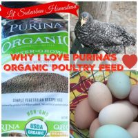 Why I Love Purina's Organic Poultry Feed