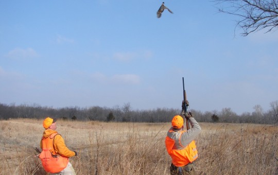 Upland Birds- Pheasant hunting Kansas (24)
