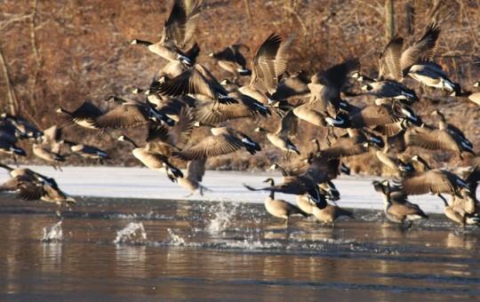 Waterfawl Hunting Kansas Lodge