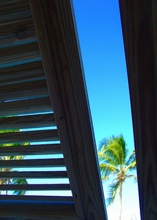 View of palm tree against blue sky, through partially opened plantation shutter