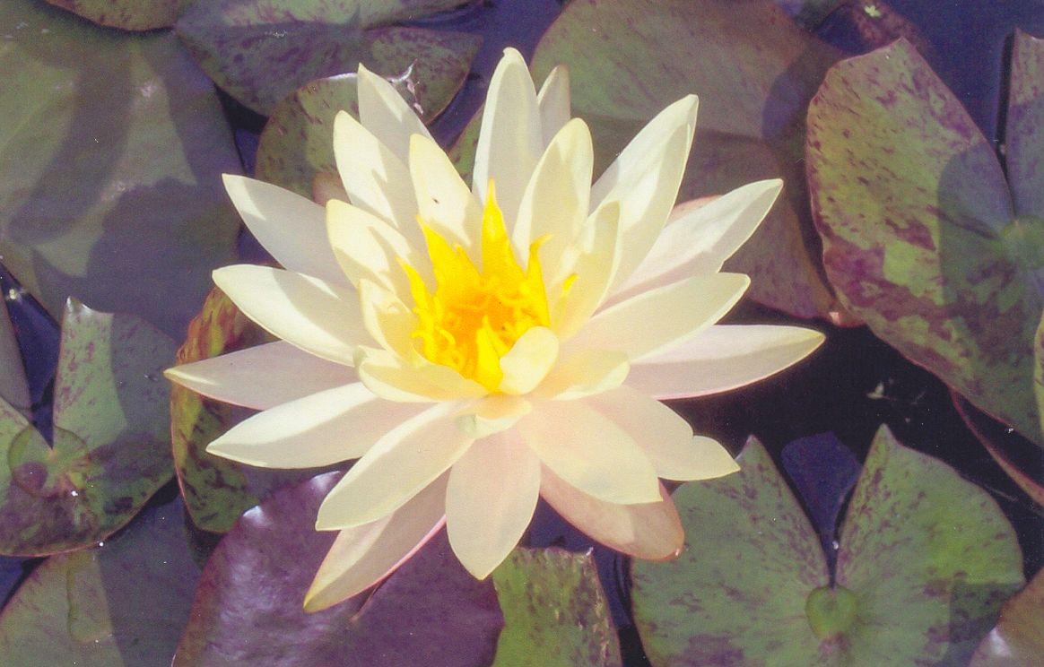 Garden Pond Supplies Perth Garden Ftempo