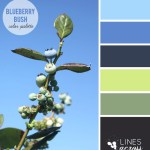 Blueberry Bush Color Palette