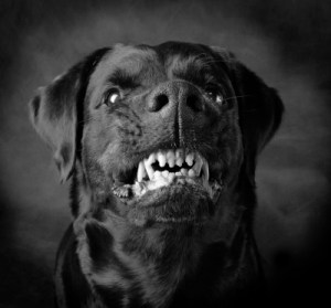 Black-Dog-Hellhound