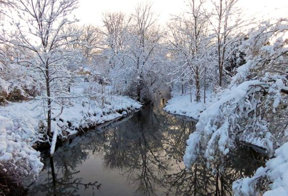 Snow covered bushes and trees line a creek where Mallard ducks are swimming