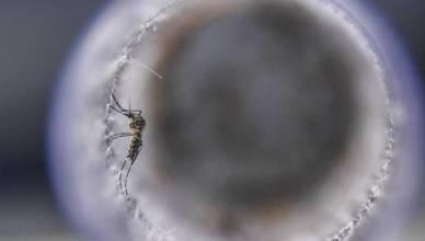 virus-zanzare