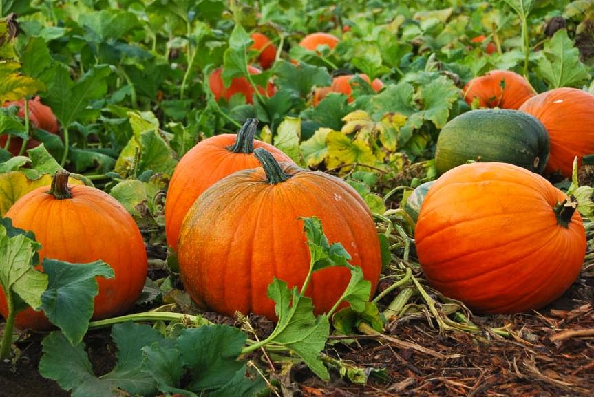 A Season of Change: More Than Pumpkins