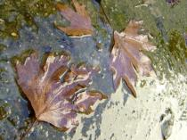 photo of dead leaves