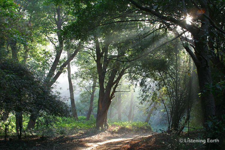 Hd Wallpaper Gautam Buddha Indian Jungle Dawn The Sounds Of Morning Birdsong