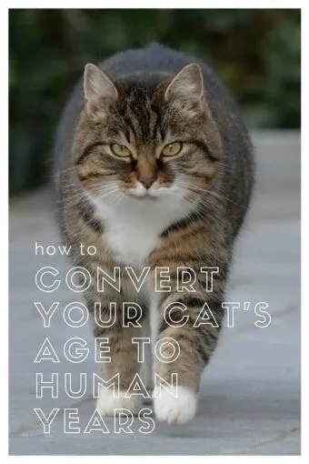 How to Convert Your Cat\u0027s Age to Human Years Litter-Robot Blog