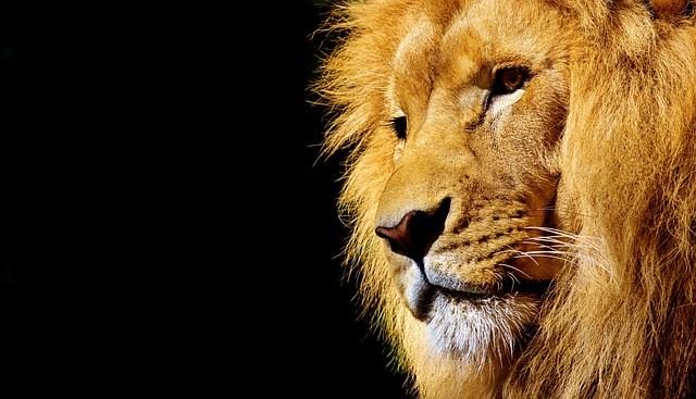 lion-2327225_640