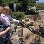 Wordless Wednesday: Giraffe Gets a Snack