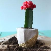 DIY Clay Planter