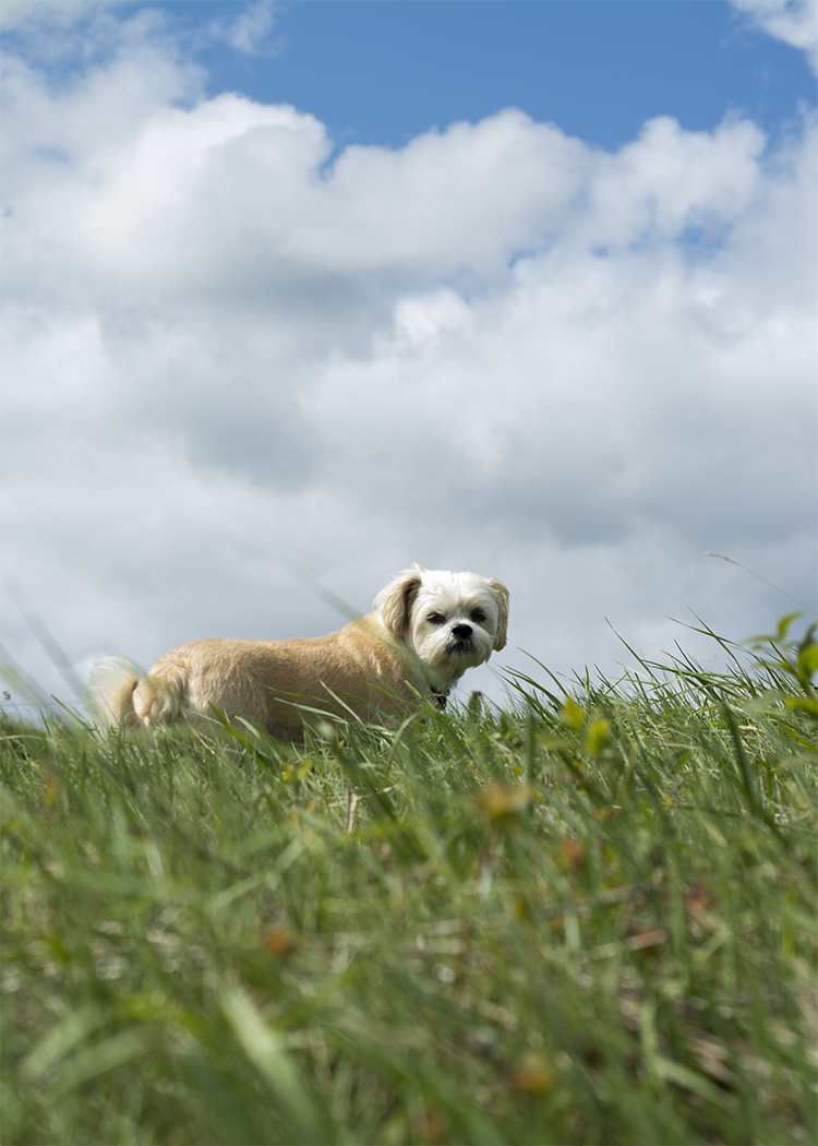 Dog-Susie