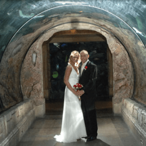 mandalay bay vegas shark wedding