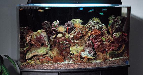 Aquarium Set-up Step-by-step Guide to Creating a Reef Aquarium