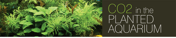 Freshwater Planted Aquarium Care and Maintenance: CO2 in the Planted
