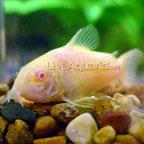 Aquarium Fish Articles On Every Aspect Of Tropical Fish