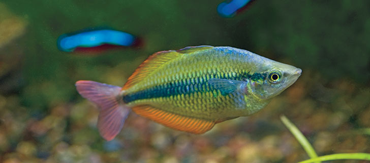 Articles on Maintaining Proper Water Quality in Aquariums