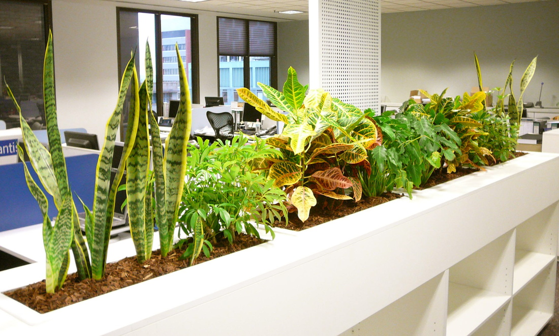 Hire Office For Green And Clean Work Environment- LIVE BLOG SPOT
