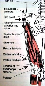 Fibromyalgie Leg Pain se produit lorsque la force et l'agilité sont perdues.