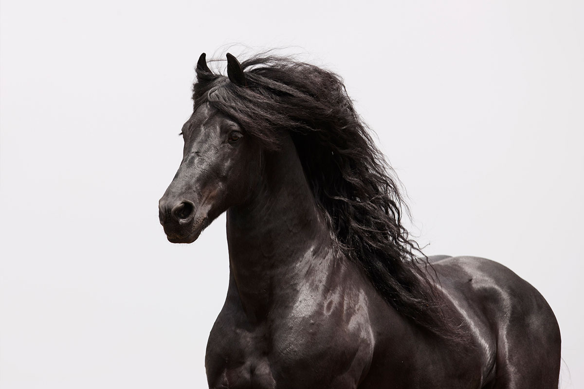 Majestic Fall Wallpaper Wild Horse And Horse Fine Art Prints By Carol J Walker