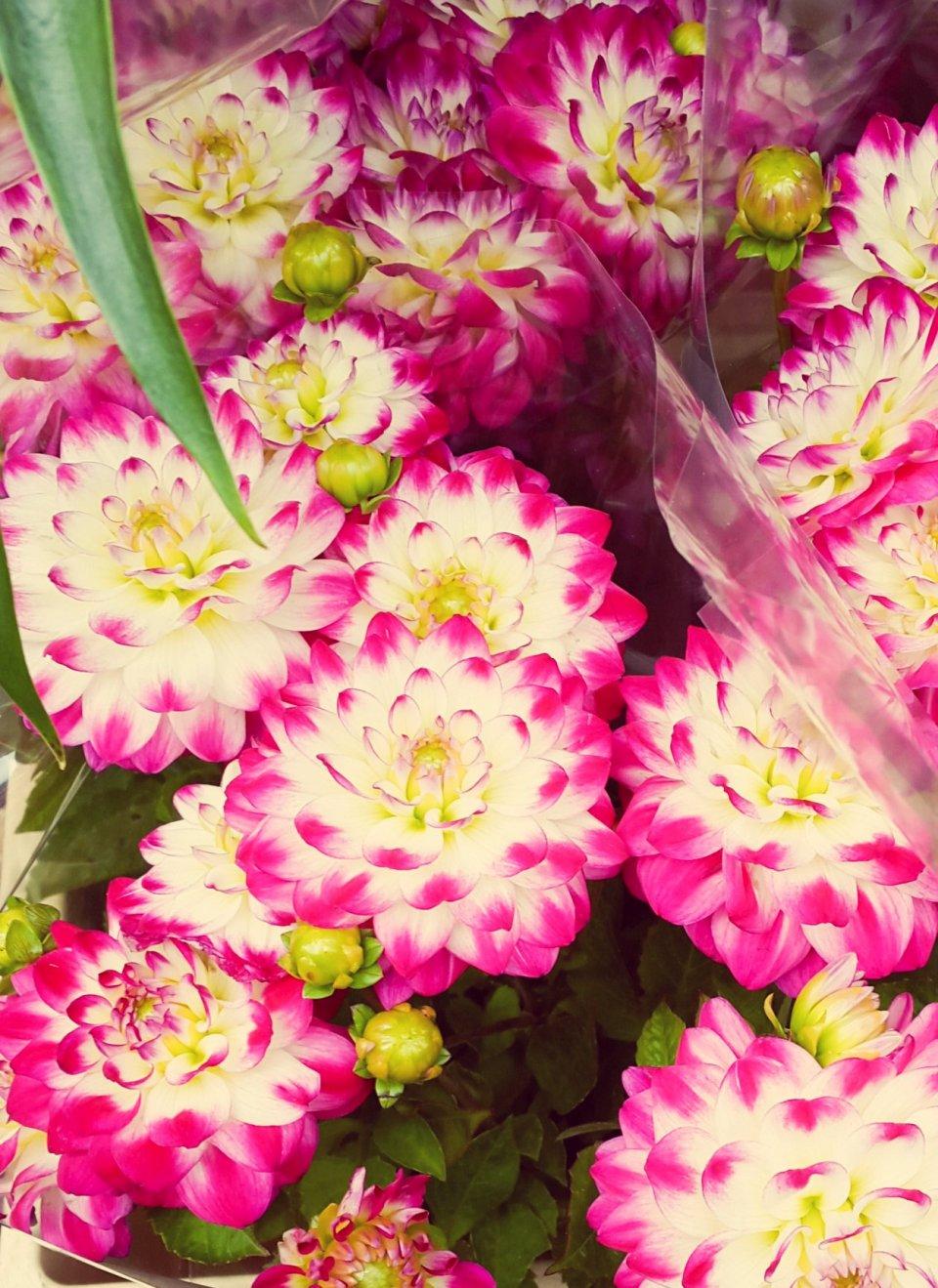 contributor-flower-market-andine-5