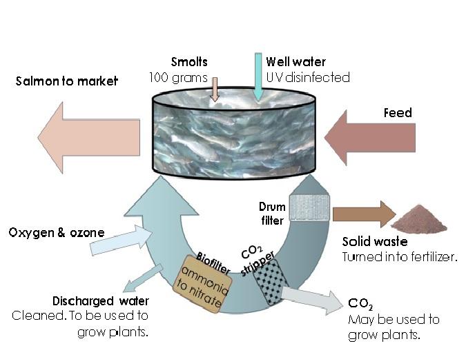 Land-based Aquaculture in Recirculating Aquaculture Systems Living