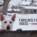fabulous-videos-spring-2013
