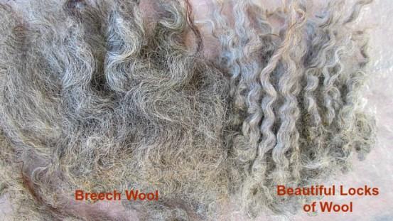 Breech wool