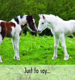 Foal_Notelet_small_-_Copy