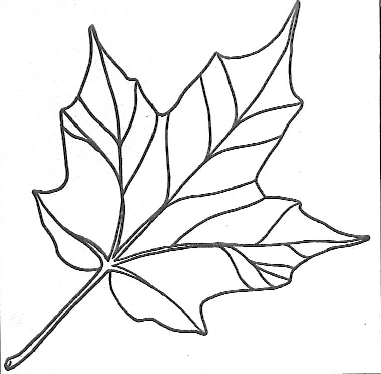 Free Fall Leaf Patterns- Print on orange yellow \ red paper, then - best of crayola coloring pages autumn leaves