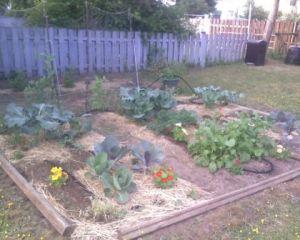 Garden Update Jun17