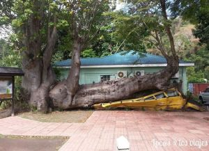 En el Jardín Botánico: un árbol aplasta un autobús-