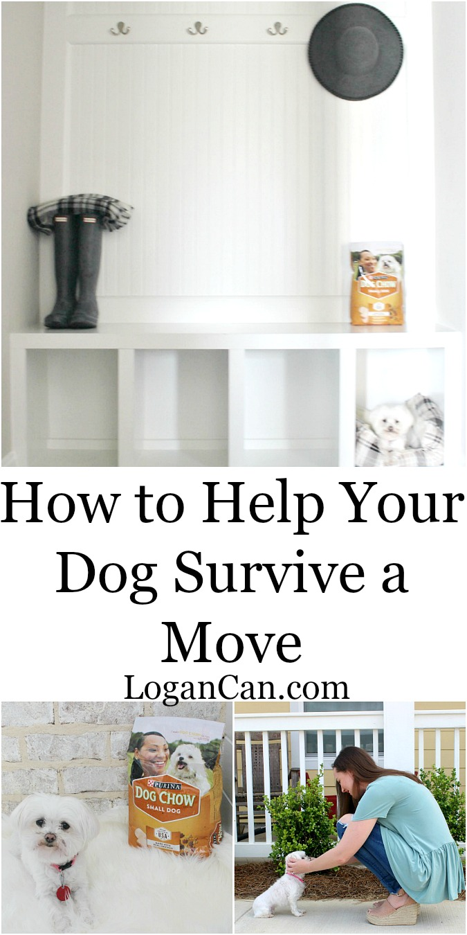 How to Help Your Dog Survive a Move with Purina from Target