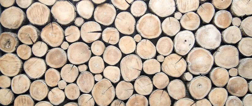 Birch Tree Fall Wallpaper The Perils Of Lumber Selection For Your Log Cabin Log