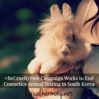 #BeCrueltyFree Campaign Works to End Cosmetics Animal Testing in South Korea
