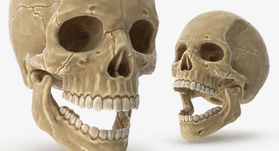 Human Skull preview