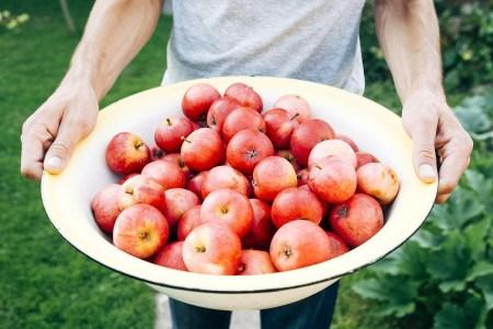fruit-pomme-bio
