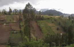 Ngadas from Malang