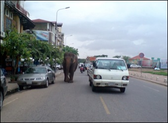 Elephant walks down the road in Vietnam