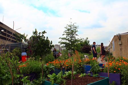 Queen Elizabeth Hall Roof Garden - Allotments and Wildflowers