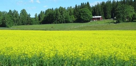 Finland Day 9 (Part 1): Fiskars, Scissors, Roller Skiing and Deer