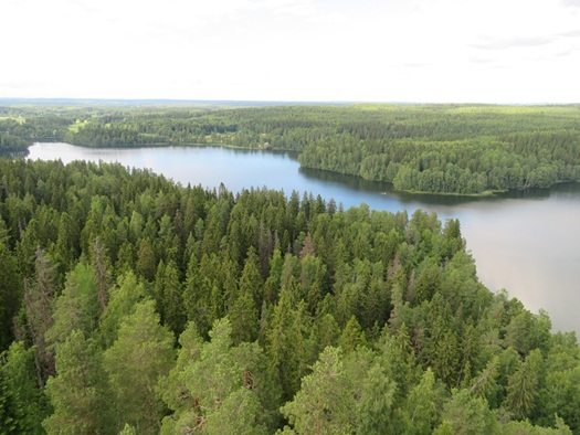 the view at Aulanko Park Forest