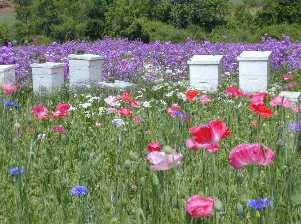 Bee Hives in wildflowers