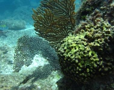 sponges 1